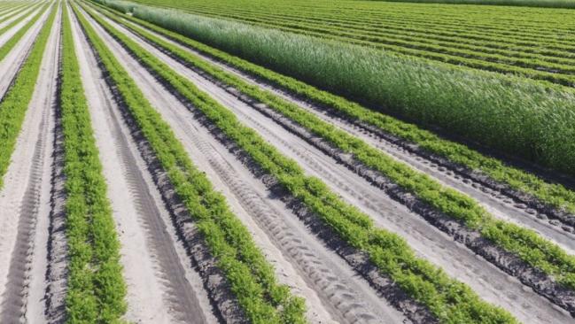 Farm visual of crops